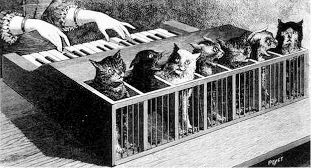 Cat organ from Gearfuse: A Compendium of Geekery Google image from https://www.gearfuse.com/the-cat-organ-the-most-bizarre-musical-instrument-youve-ever-seen/