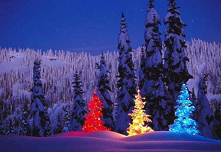 A rainbow trio of  Christmas trees lights up the night (location unknown).