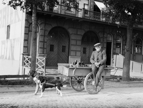 1904 Dog Cart, Netherlands Google image from http://www.time-capsules.co.uk/picture/number250.asp