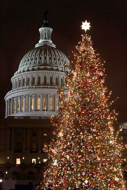 Capitol Christmas tree in Washington, D.C.