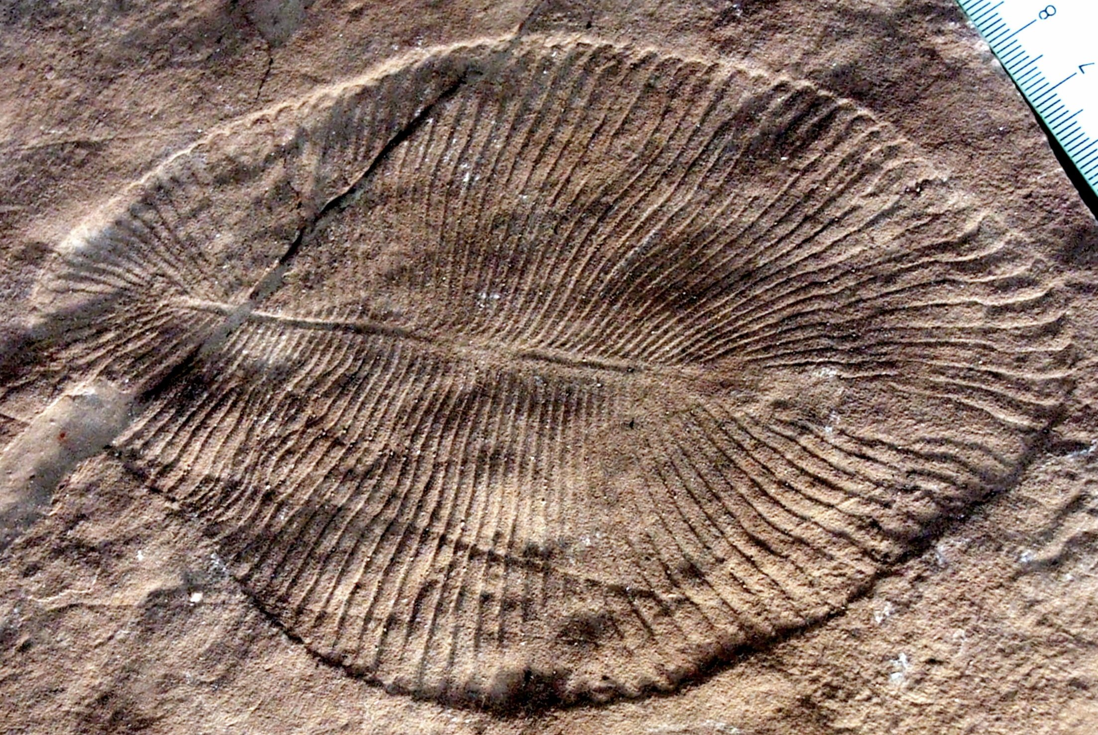 Ediacaran biota Google image from https://simple.wikipedia.org/wiki/Ediacaran_biota