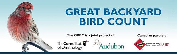 The Great Backyard Bird Count 2013 Poster Google image from http://gbbc.birdcount.org/news/poster/