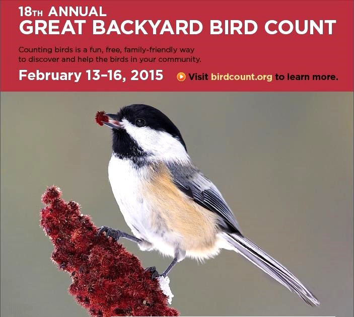 The Great Backyard Bird Count 2015 Poster Google image from http://www.friendsofgreatswamp.org/Docs/GBBC%20Poster%202015-Local%20info.pdf