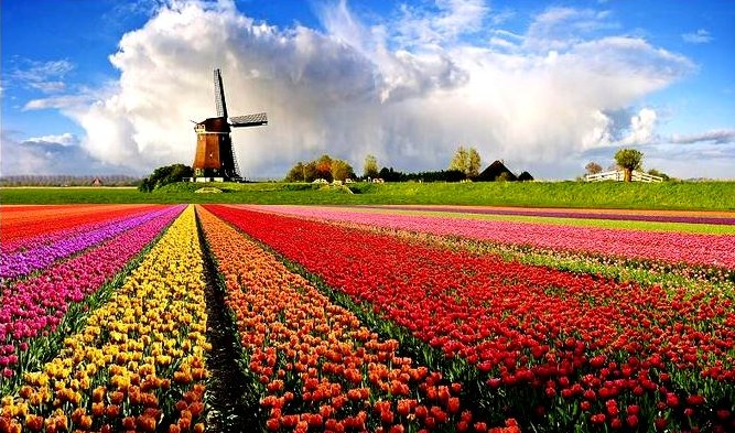 Spring in Holland Google image from http://gallery.photo.net/photo/4097642-md.jpg