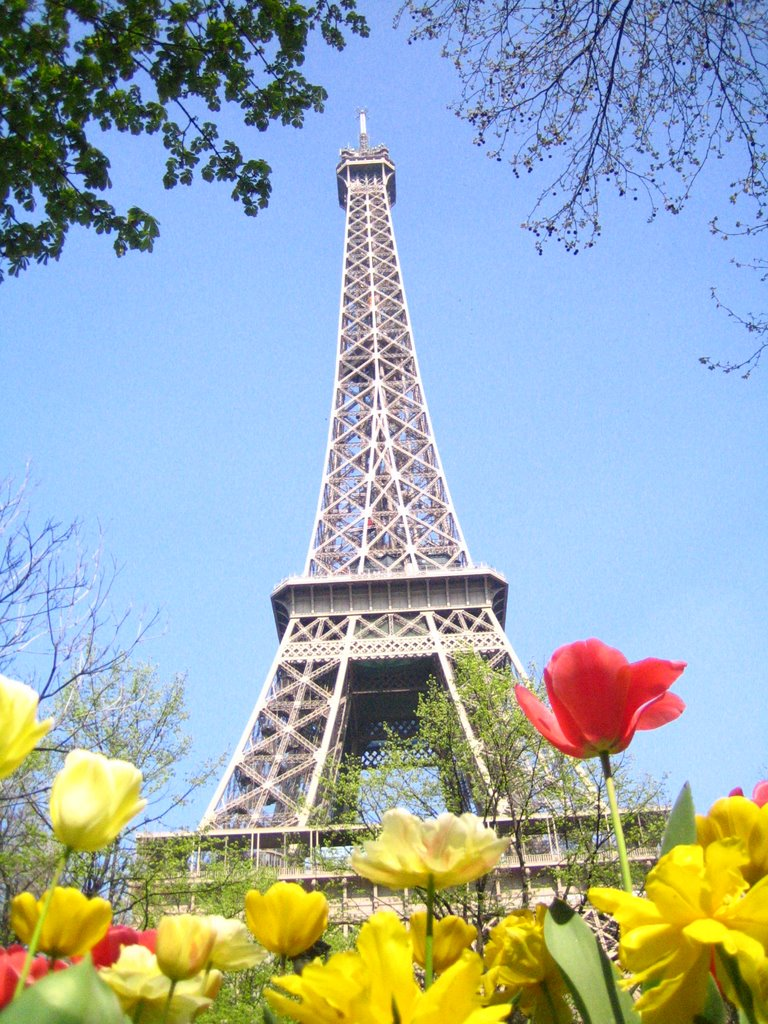 Springtime in Paris Google image from http://static.panoramio.com/photos/large/4448564.jpg