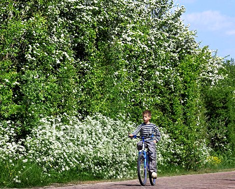 Boy riding bicycle wearing clogs Google image from http://www.alamy.com/stock-photo-farmers-notice-board-and-dutch-boy-with-wooden-clogs-riding-bicycle-37267111.html