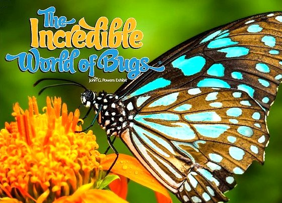 Incredible World of Bugs image from http://www.sheridancentre.ca/home/