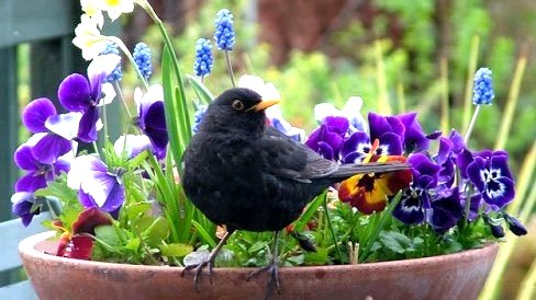 Gardening to Attract Birds image from Port Credit Library Email April 24, 2015