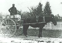 Delivering Milk Cans with Horse Drawn Wagon Google image from http://ketetararua.peoplesnetworknz.info/image_files/0000/0000/0716/Alfred_Mansell_medium.jpg