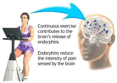 Benefits of Exercise Google image from http://pennstatehershey.adam.com/graphics/images/en/19476.jpg