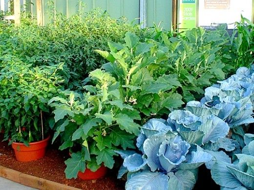 How to Grow Vegetables in Pots and Containers - Tips, Guides, Facts Google image from https://www.pinterest.com/pin/251146116696914008/