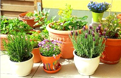 Herbal Container Gardening Google image from http://www.vegetable-gardening-online.com/images/container-herb-garden2.jpg