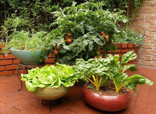 Container Gardening Google image from http://dancevisionnj.org/container-vegetable-garden/