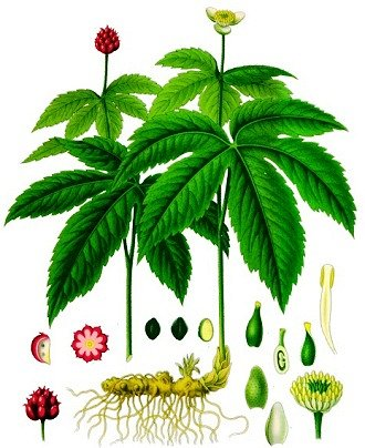 Native American Herbal Medicine Google image from http://www.warpaths2peacepipes.com/images/goldenseal.jpg