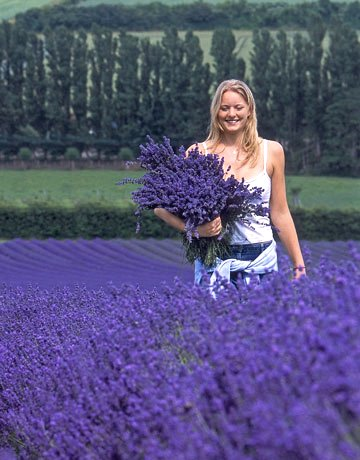 Girl in Lavender Field, from Country Living, Google image from http://www.countryliving.com/cm/countryliving/images/girl-field-0908-de.jpg