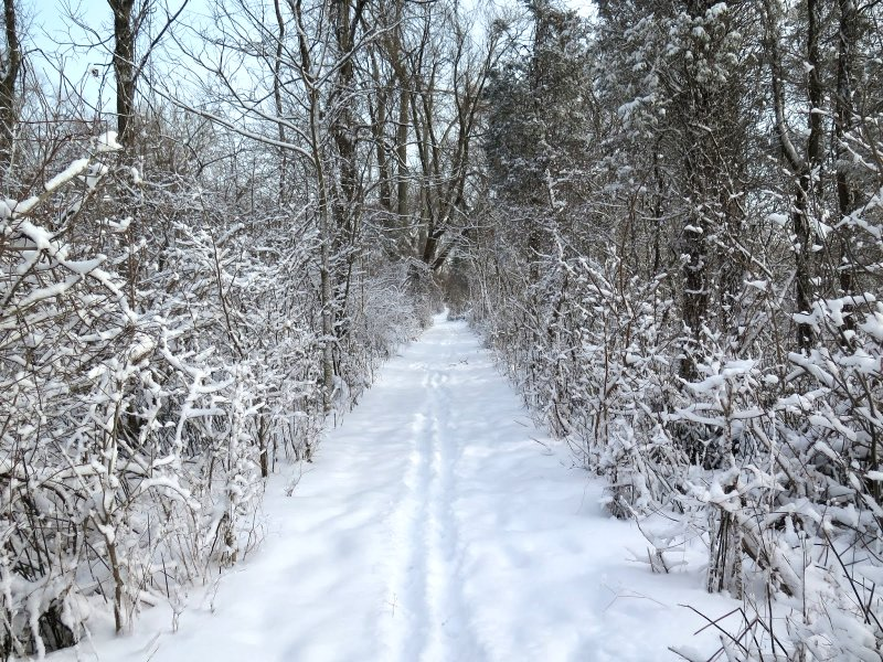 Winter Trails Google image from http://1.bp.blogspot.com/-tyFVk3sexlA/UtsAtIFf_3I/AAAAAAAAOlM/nz-btmHZu4Y/s1600/001.JPG