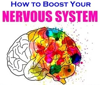 How to Strengthen Your Nervous System Google image adapted from http://www.top10homeremedies.com/wp-content/uploads/2015/10/nervous-syestem-feat-277x190.jpg