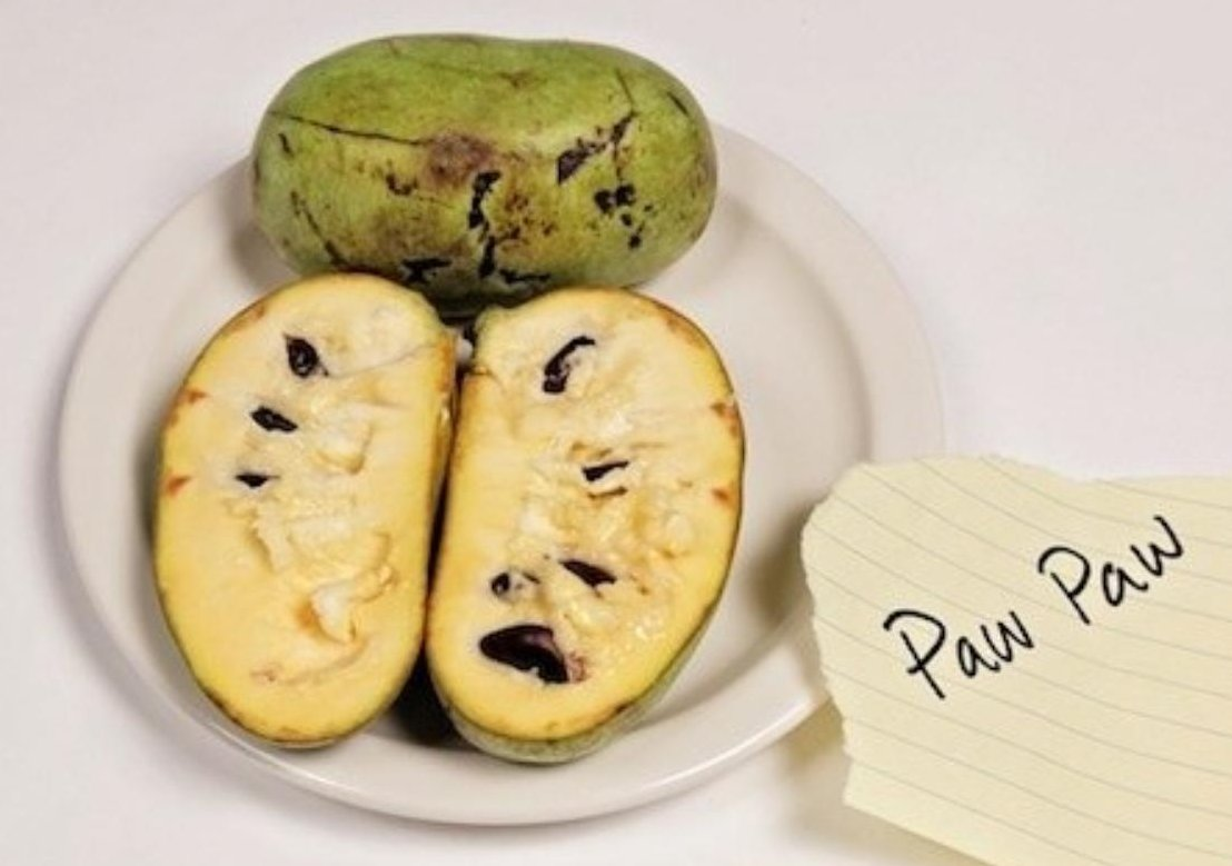 American fruit paw paw Google image from https://www.vice.com/en_us/article/paw-paw-the-weirdest-american-fruit-you-never-knew-about