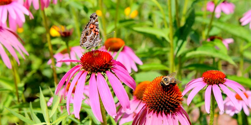 Landscaping for Pollinators - Free Gardening Workshop Google image from https://www.eventbrite.ca/e/landscaping-for-pollinators-free-gardening-workshop-tickets-59545140117?aff=eac2
