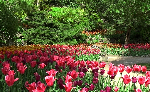 Flowers at Royal Botanical Gardens, Burlington Google image from http://www.dailywebtv.com/files/2012/07/Picture-6.jpg