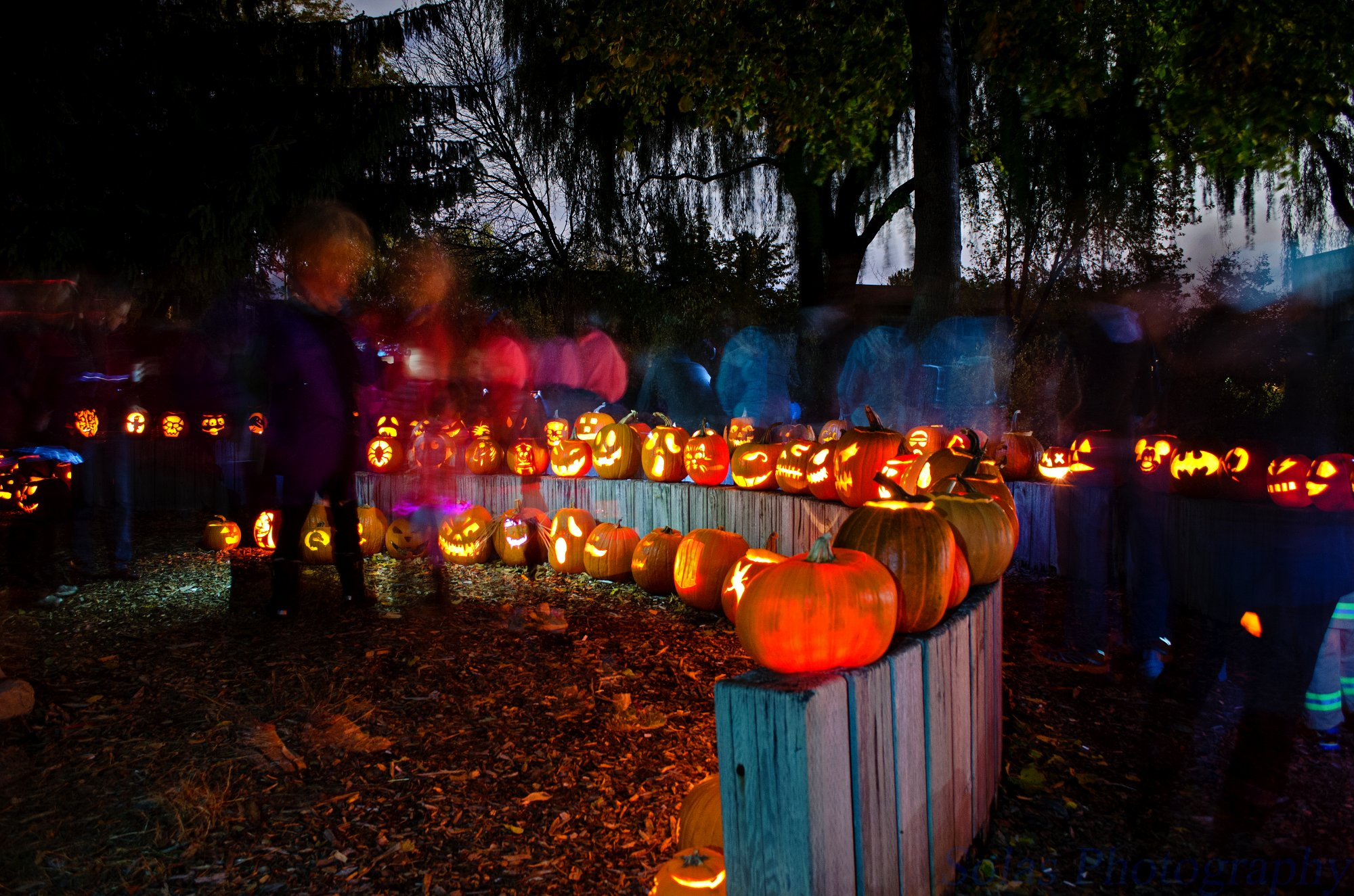SHORA pumpkin parade 2015 Google image from http://www.shora.ca/wp-content/uploads/2015/05/DSC_0400.jpg
