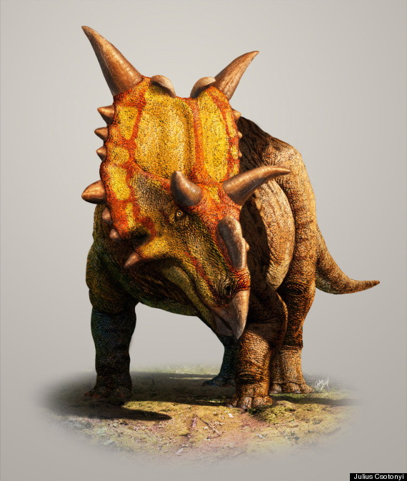 o-XENOCERATOPS-DINOSAUR-ALBERTA-570.jpg Google image from http://www.huffingtonpost.ca/2012/11/08/new-alberta-dinosaur-discovered-from-fossilized-horn-_n_2091446.html